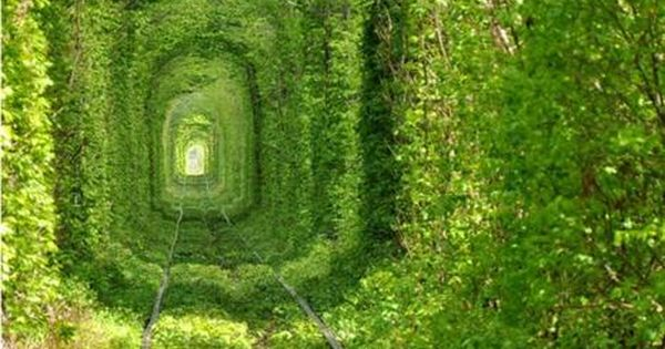 GREEN train tracks Train Tree Tunnel, Urkraine. Photo by Oleg Gordienko.