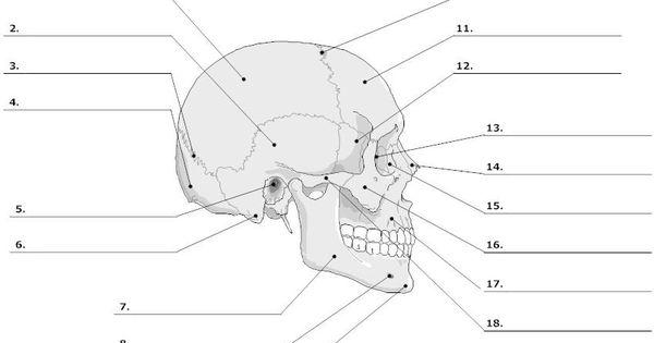 Unlabeled Skeleton Print Out