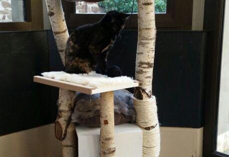 Arbre a chat fait maison en bouleau et mdf brico - Griffoir chat fait maison ...
