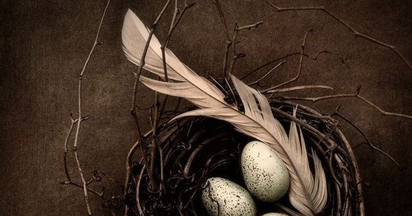 Eggs in Nest - Still Life stilllife photography