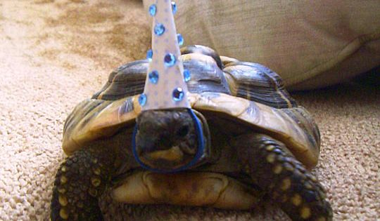 So this tortoise celebrated its birthday today… The fact that this tortoise