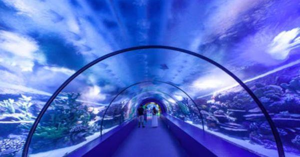 Antalya Aquarium Tunnel Aquarium Biggest Aquarium Big Aquarium Aquarium Antalya