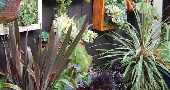 Schilderij van planten tuininspiratie pinterest for Planten schilderij intratuin
