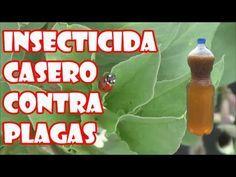 Insecticida Casero Para Combatir Plagas Pulgon Cochinilla Arana Roja Y Mosca Blanca En Las Plantas Plantas Mini Jardins Idees Jardin Jardins