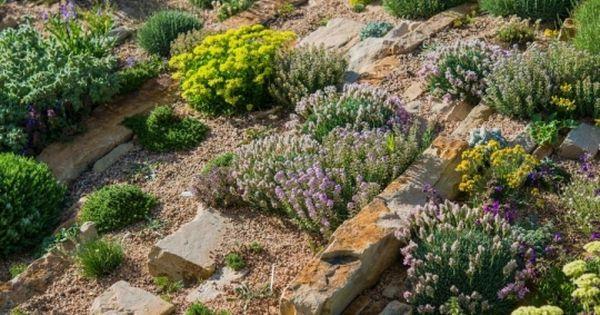 Rosliny Na Skalniaku Fot Tomasz Zajda Fotolia Com Drought Tolerant Landscape Porch Landscaping Front Porch Landscape