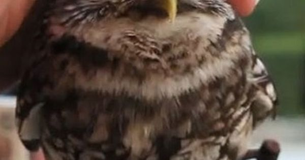 Cute Owl Funny Pictures lol