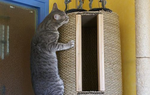 DIY hollow cat tree. Instructions in French, but the pictures are easy
