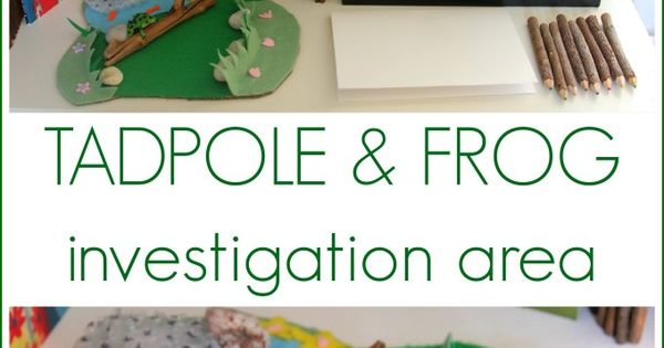 Tadpole and frog investigation and observation area. The Imagination Tree is one