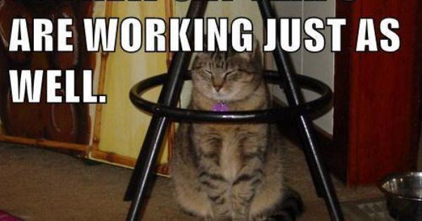 The Cat Traps Are Working The Cat Traps Are Working