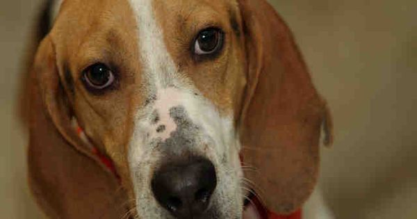 For More Information About This Animal Call Animal Welfare League Of Illinois Chicago Ridge At 708 636 8586 Animal Shelter Animals