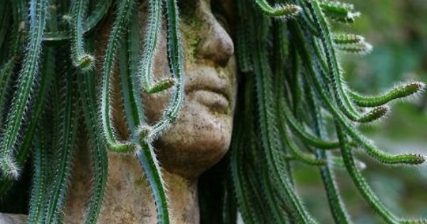 Medusa garden head planter gardening pinterest head planters planters and gardens - Medusa head planter ...