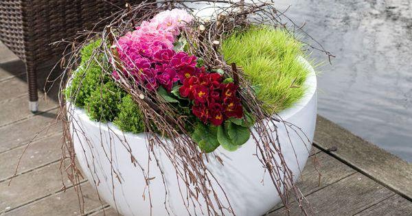 mit primeln k bel bepflanzen k bel mit birkenzweige zaun blumen und pflanzen pinterest. Black Bedroom Furniture Sets. Home Design Ideas