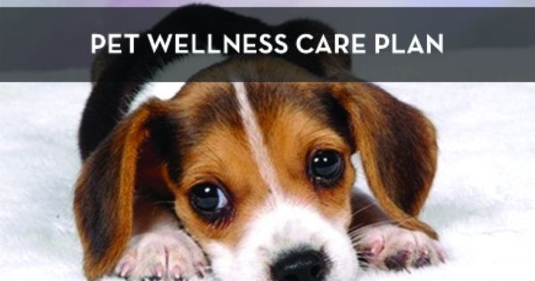 Lifelong Learning Library Pet Wellness Dogs Dog Pictures