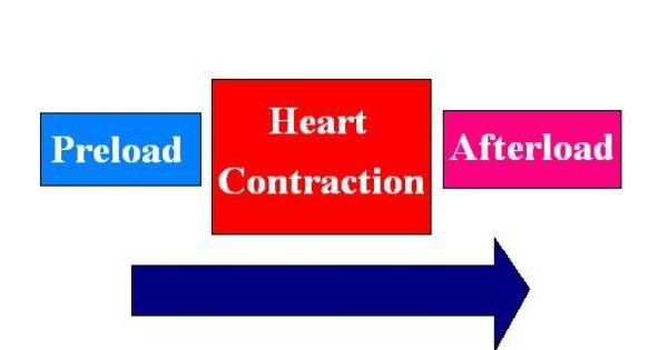 preload and afterload relationship quiz