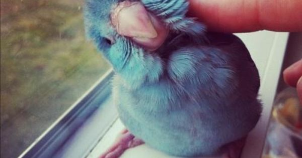 Made me want to have a pet bluebird