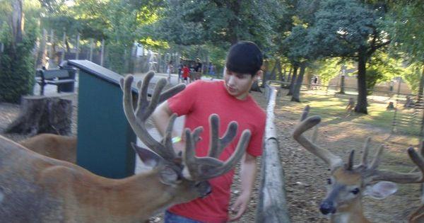 Coupons for wisconsin dells deer park