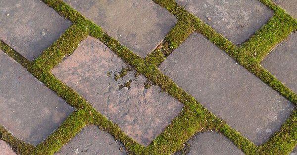 how to grow moss between rocks