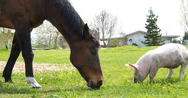 Pin On Boxer Of Animal Farm Abegail A