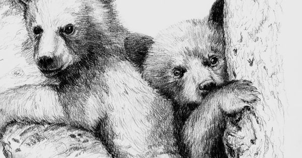 bear sketches | Beth Dix Art...embroidery and quilting ...