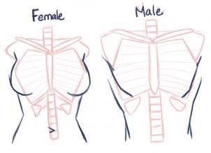 Drawing Anatomy Dump Part 2 Dump Harder Manga Drawing Girl Anatomy Art Reference