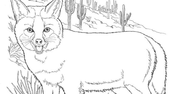 north america animals coloring pages - photo#21