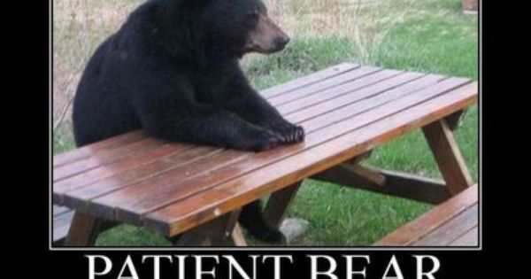 patient bear | Funny Bears memes and pics | Pinterest ...