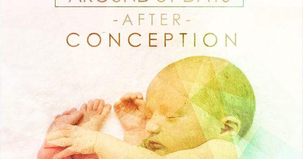 essay on abortion pro choice