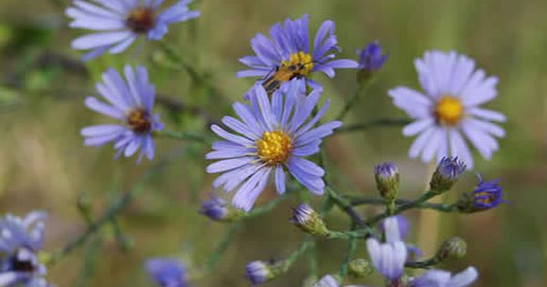Prairie Grasses And Wildflowers Linnaeus Arboretum Prairie Planting Wild Flowers Arboretum