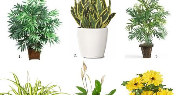 6 Air Purifying House Plants! 1. Bamboo Palm, 2. Snake Plant, 3.