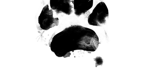 Paw print paintings by pawprint by JOYcoCreative on Etsy, $25.00
