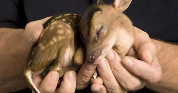 baby baby deer who could hurt something so sweet even when they