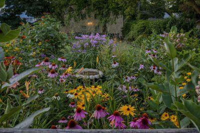 Coneflower Companion Plants Tips On Companion Planting With Echinacea Native Plant Landscape Native Plants Plants