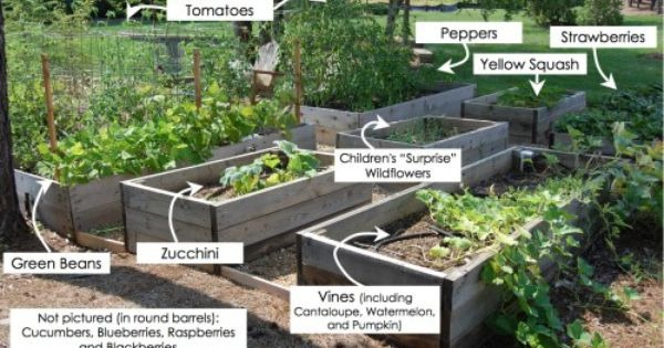 Planting a summer veggie & fruit garden and info on lessons learned