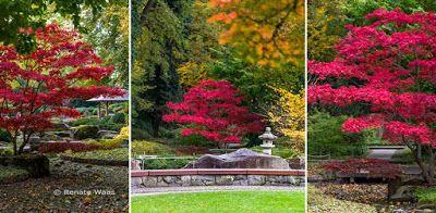 Der Botanische Garten Augsburg Japanischer Garten Botanischer Garten Augsburg Garten Botanischer Garten