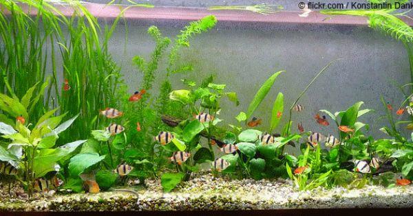 aquarium aquarium pinterest aquarium ber familie. Black Bedroom Furniture Sets. Home Design Ideas