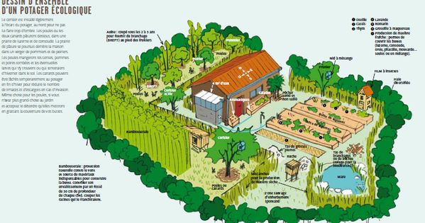 Ressources pour permaculture permaculture designs pinterest permaculture gardens and for Exemple potager permaculture