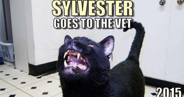Talking Kitty Cat - Sylvester Goes To The Vet   Sylvester ...