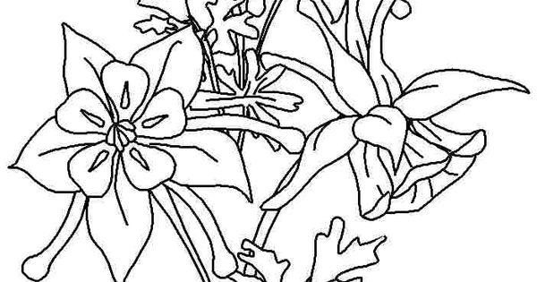 Printable Coloring Pages Columbine Flowers For Girls