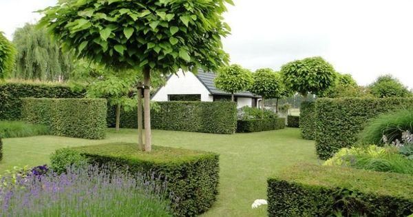 Arbre pour petit jardin les vari t s petit d veloppement gardens and planting - Arbre pour petit jardin ville colombes ...