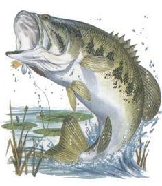 Bass Images Of Fish Largemouth Bass Fishing Wallpaper Background Fish Drawings Bass Fishing Tattoo Fish Art