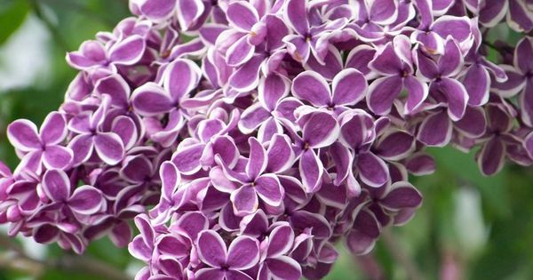 flowers you've never heard of
