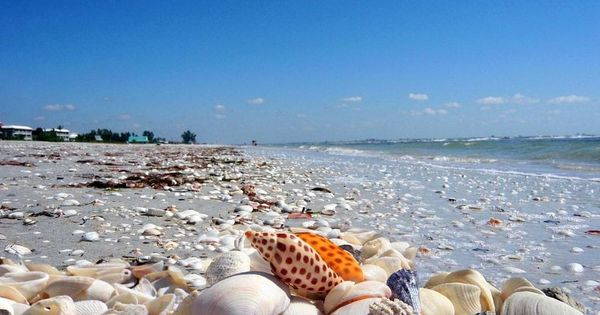 Shell lovers' paradise Sanabel Island Florida Been here and it's true! Shells
