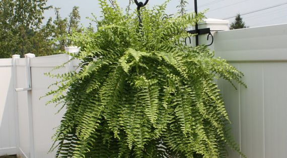 Hanging Plants On Fence Post 23 Love This Must Buy