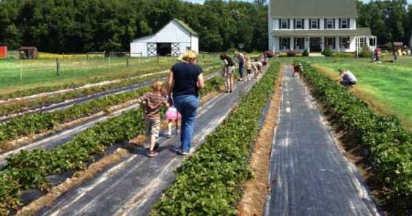 Southern Comfort Berry Farm In Bushwood Maryland Southern Comfort Farm Stay Beautiful