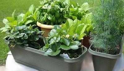 Cultivo de verduras y hortalizas en maceta   Macetas