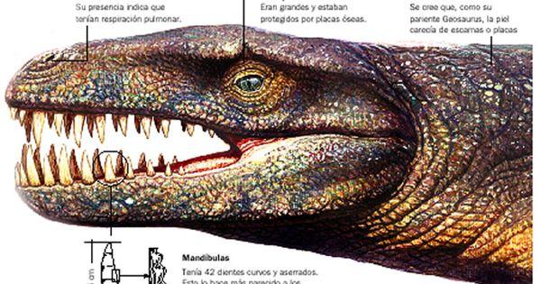 Dakosaurus andiniensis | An Unusual - 58.8KB