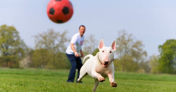 Slideshow Exercising With Your Dog Dog Thoughts Cool Pets Dog
