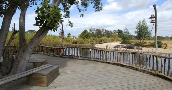Kubu River Hippos Werribee Open Range Zoo Werribee Victoria Australia By Studio Hanson Roberts
