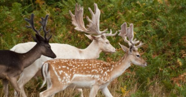 Barcelona Fallow Deer Unusual Animals Animals Beautiful