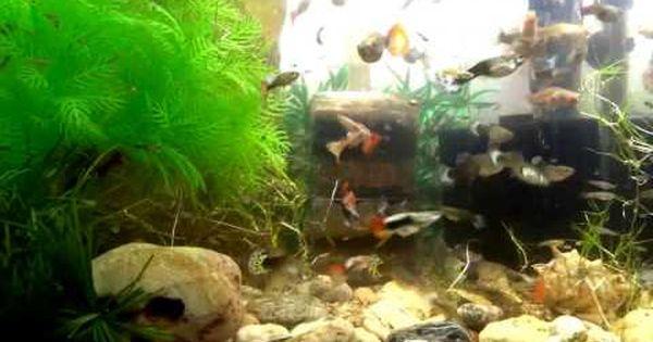Beautiful Fish Aquarium Fishtank Guppy Fish Tank Wallpaper Hd My Tank Hy Beautiful Fish Tank Wallpaper Fish Tank